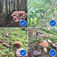 How to select multiple photos on an iPhone